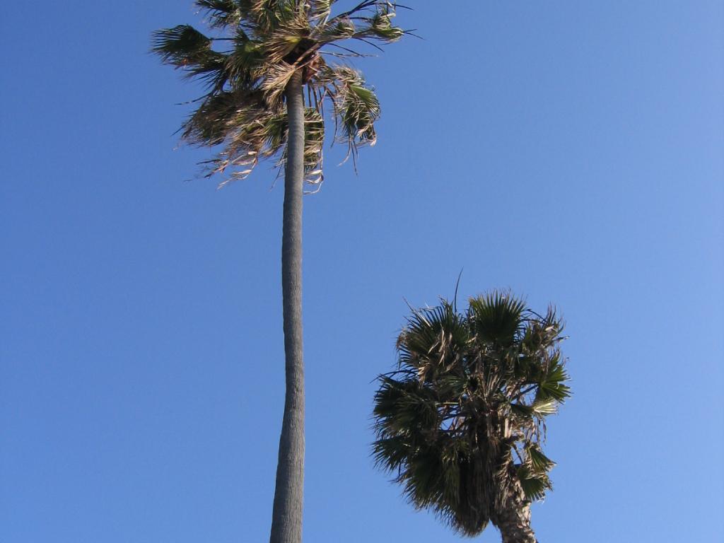 L.A / O.C おすすめスポットシリーズ Part.2【色々な顔を持つ Venice Beach(ベニスビーチ)エリア】